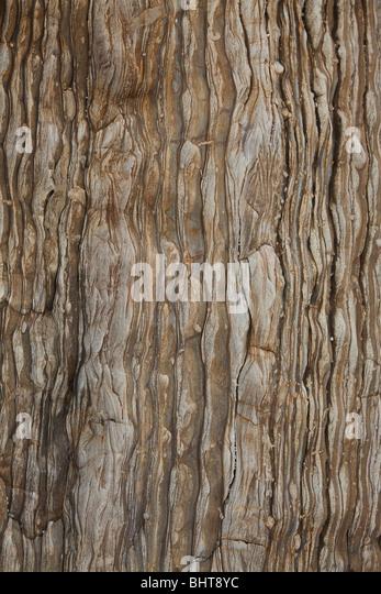 wooden background - Stock-Bilder