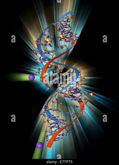 RNA triplet repeat expansion. Molecular model of a CUG triplet repeat expansion in a molecule of double stranded - Stock Image