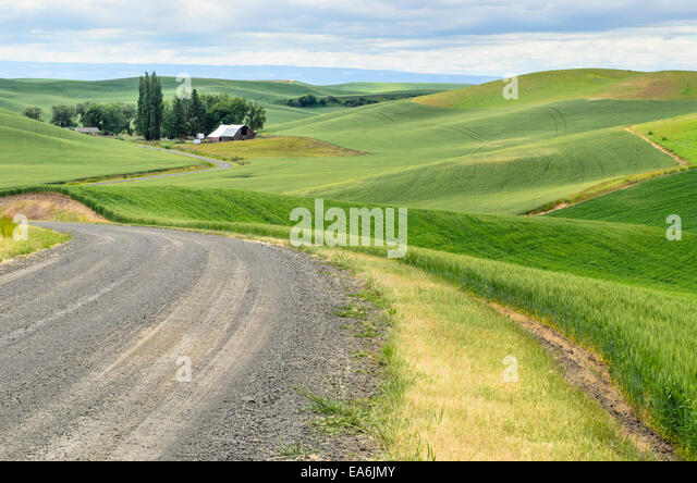 USA, Washington State, Palouse, Scenic countryside - Stock Image