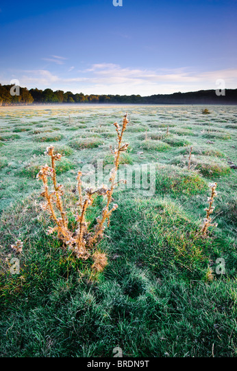 Sunrise at Balmer Lawn near Brockenhurst, New Forest, Hampshire, England, UK - Stock Image
