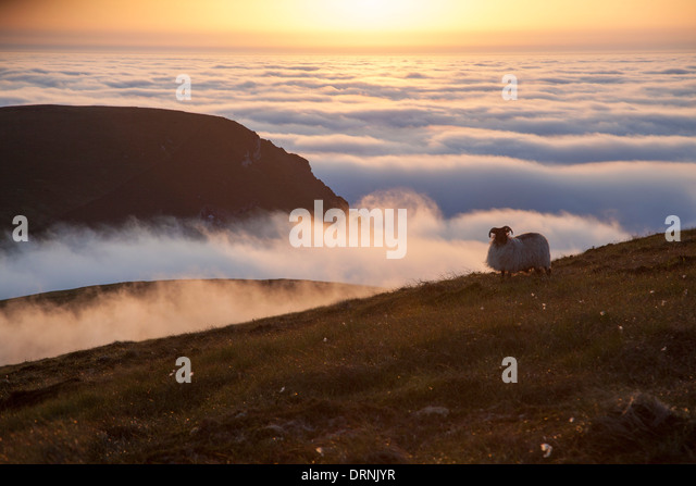 Sunset clouds and sheep, Glinsk mountain, North Mayo seacliffs, County Mayo, Ireland. - Stock Image