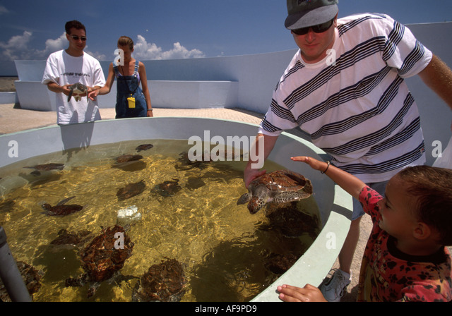Grand Cayman BWI West Bay West Bay Cayman Turtle Farm breeding tank green sea turtles yearlings visitors father - Stock Image
