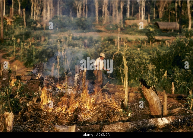 forest clearing paraguay - Stock Image