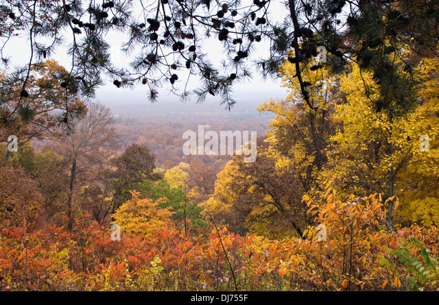 Autumn Color in Clark State Forest in Clark County, Indiana - Stock Image