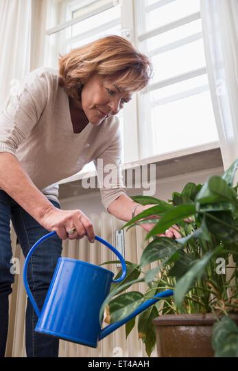 Senior woman watering houseplant near window, Munich, Bavaria, Germany - Stock-Bilder