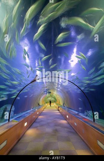 Felix candela stock photos felix candela stock images for Aquarium valencia bar