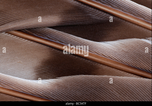Close-up of the feathers of a wing. - Stock-Bilder
