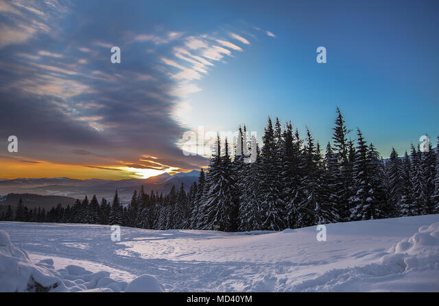 Forest edge on snow covered landscape at sunset, Gurne, Ukraine, Eastern Europe - Stock Image