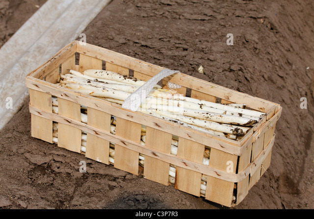Germany, Close up of cut asparagus in crate - Stock Image