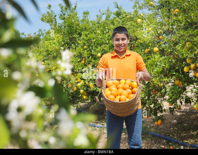 Boy showing basket full of oranges - Stock Image