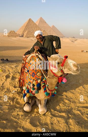 Camel & Camel driver, Pyramids, Giza, Cairo, Egypt - Stock Image