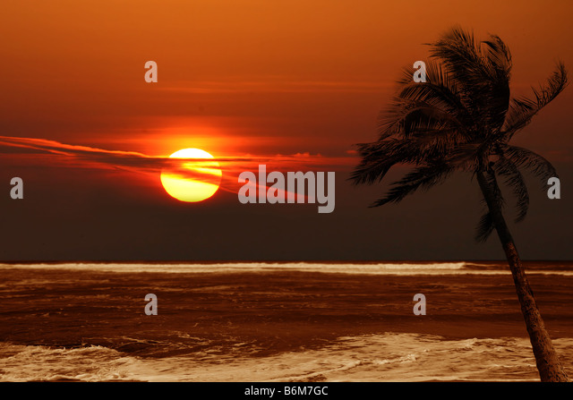 Lone Palm Tree at Sunrise With Dramatic Colors of Orange - Stock Image