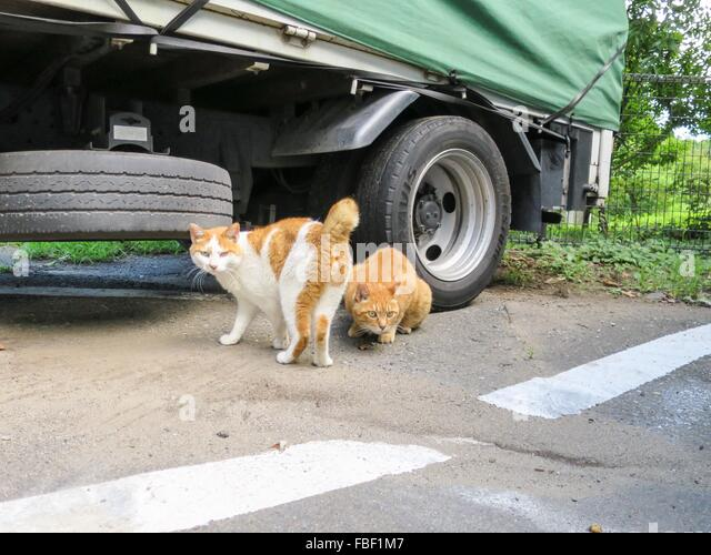 cat communication with other cats