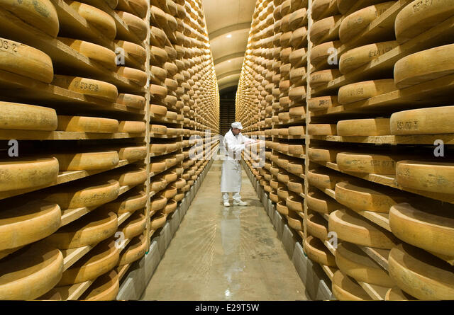 France, Doubs, Saint Antoine, fruitere of Comte of Fort Saint Antoine, ripening cellar of Comte Marcel Petite, cheese - Stock-Bilder