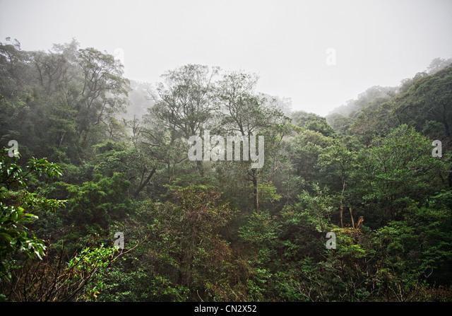 Forest scene, Kirishima, Kyushu, Japan - Stock Image