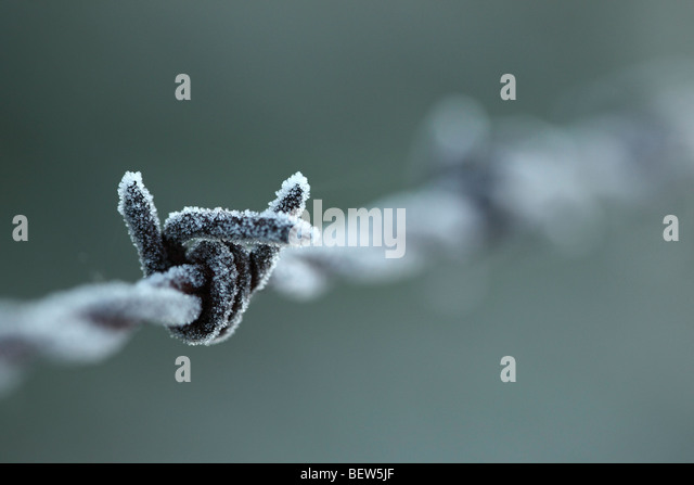 Barbed Wire covered in frost - Stock Image