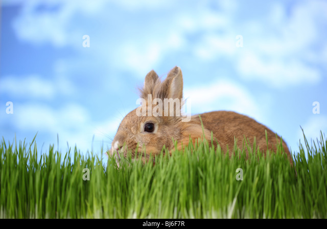 Rabbit in grass - Stock Image