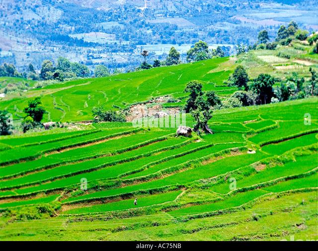 Marayur stock photos marayur stock images alamy for Terrace farming in india