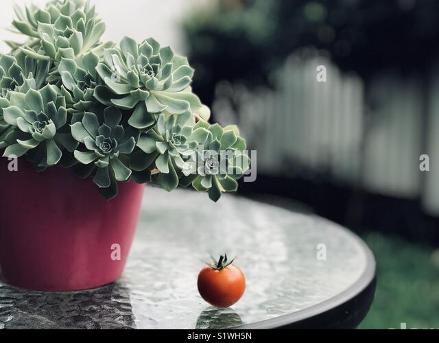 My first harvest - Stock Image