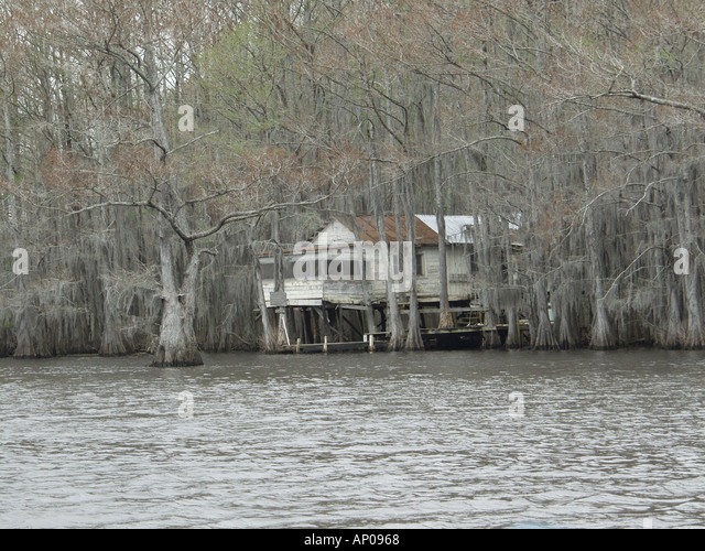 Cypress trees in caddo lake stock photos cypress trees for Fishing cabins in texas