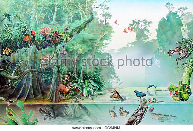 Rain forest - Stock-Bilder