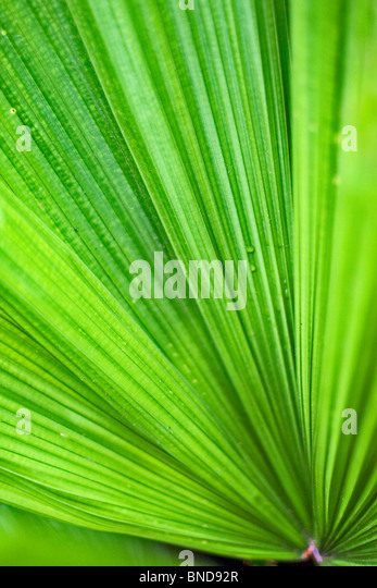 An Abstract View of A plant Leaf - Stock Image