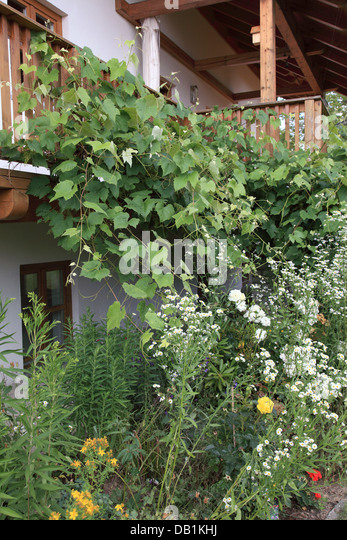 flowers in garden and balcony at a Bavarian farm house. Photo by Willy Matheisl - Stock Image