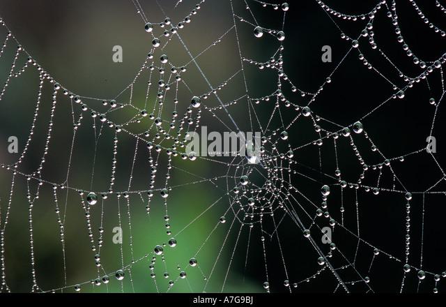 dewy web - Stock-Bilder