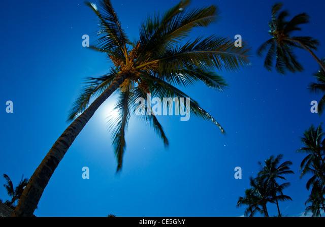 Tropical Waves Sky Mountains Clouds Island Moon Night: Hawaii Palm Stars Stock Photos & Hawaii Palm Stars Stock