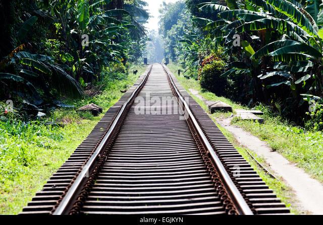 Railway tracks in jungle - Stock-Bilder
