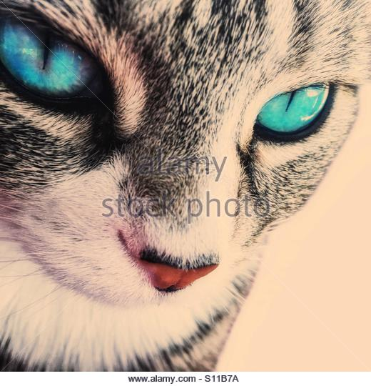 Cat - Stock Image