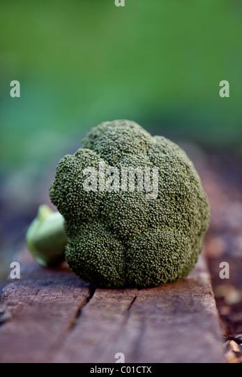 A head of broccoli in a garden - Stock Image
