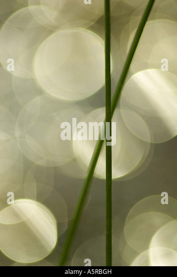Closeup of grass - Stock-Bilder