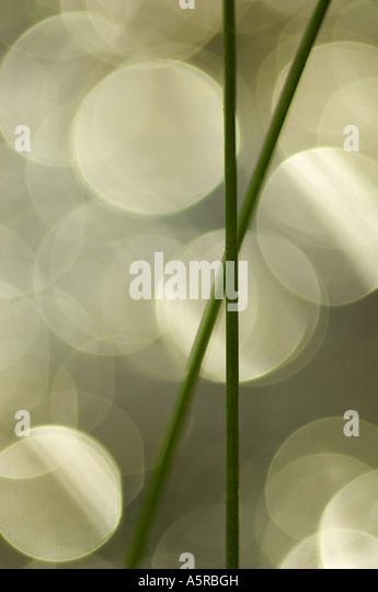 Closeup of grass - Stock Image