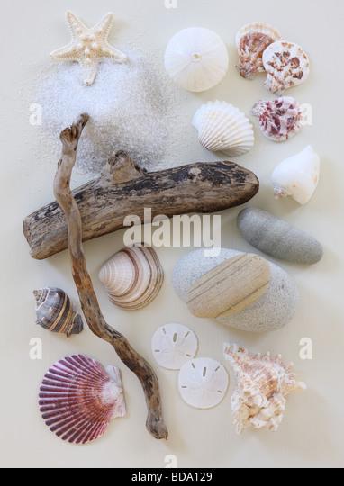 Beach items still life - Stock Image