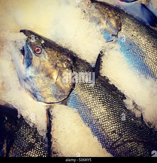 Salmon on ice, Pike Place Market, fish market, Seattle, USA - Stock Image