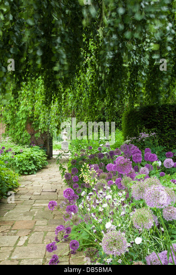 The early summer borders of the Terrace Garden framed by a weeping beech tree, Cottesbrooke Hall, Northamptonshire, - Stock Image
