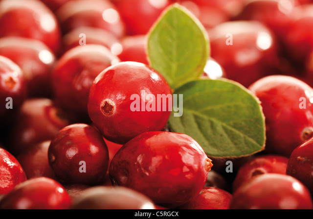 Cranberries (Vaccinium macrocarpon), full frame, close-up - Stock Image