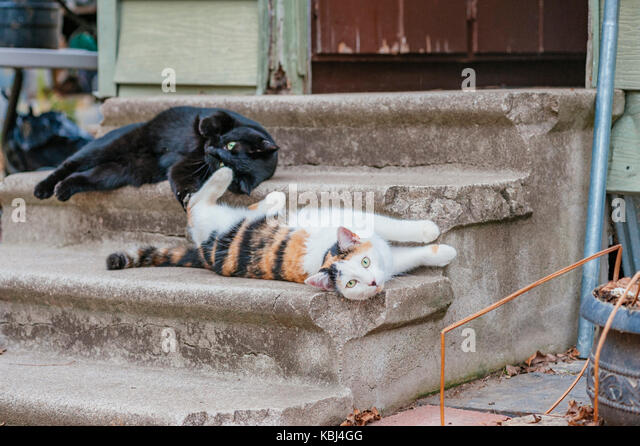 Two cute feral cats lounging on the steps of an abandoned building. - Stock Image