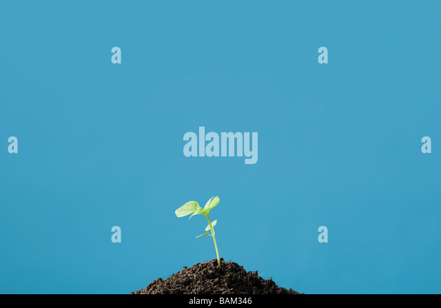 A growing plant - Stock Image