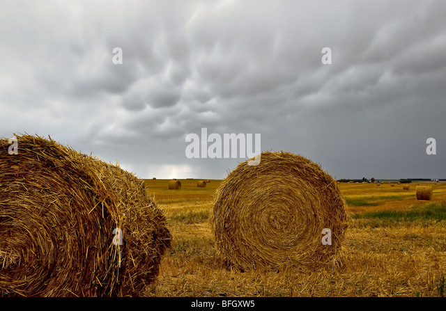 Hay bails and Mammatus cloud formations, St. Leon, Manitoba, Canada. - Stock Image
