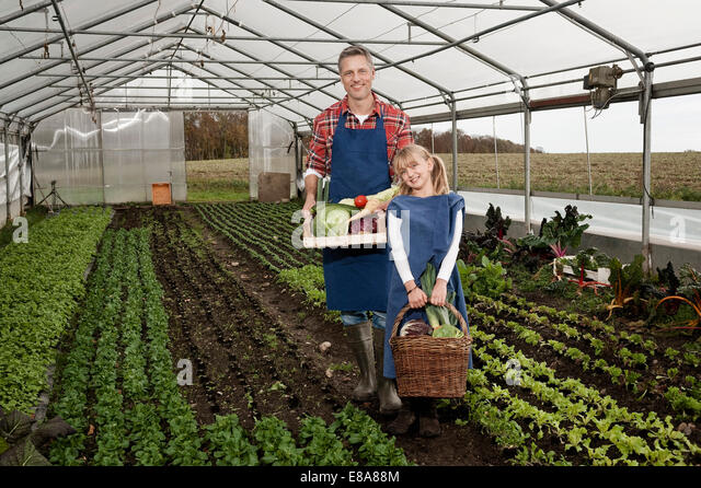 Father and daughter harvesting vegetables in greenhouse - Stock Image