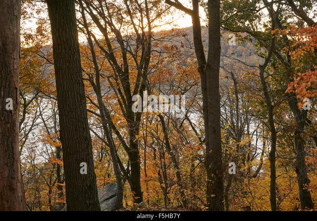 Susquehanna River in Fall foliage near Marietta Pennsylvania, USA - Stock Image