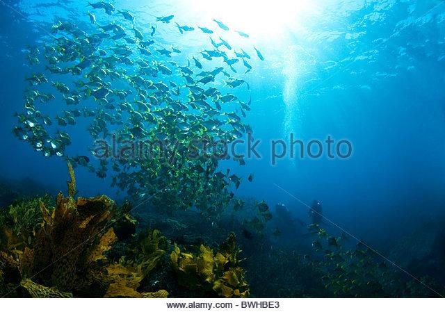 Rottnest Island reef West Australia - Stock Image