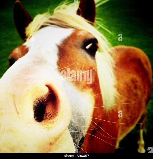 Close up of horse nostril - Stock-Bilder
