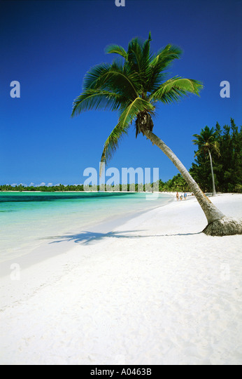 Dominican Republic Punta Cana, white sandy beach and palm trees - Stock Image