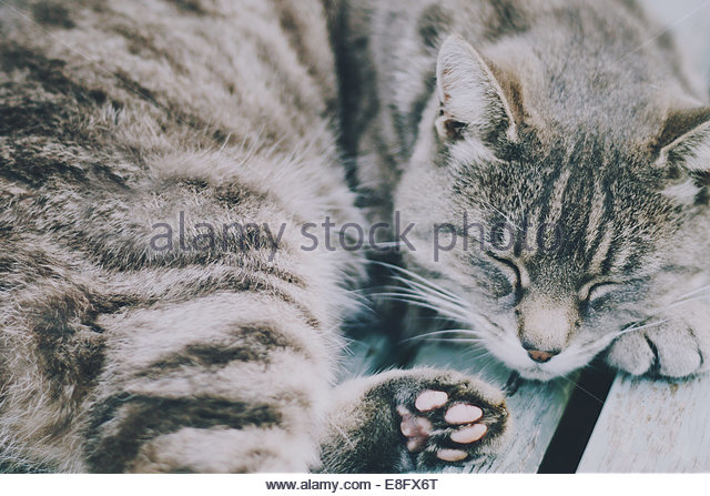 UK, Grey tabby cat sleeping on bench - Stock Image