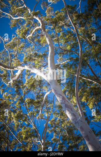 MissionTree8687   - Stock Image