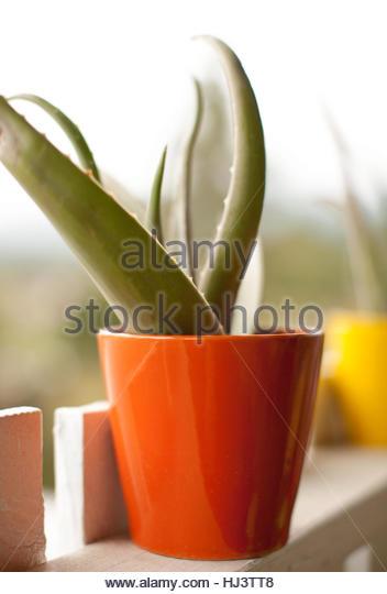 Porch Succulent - Stock-Bilder