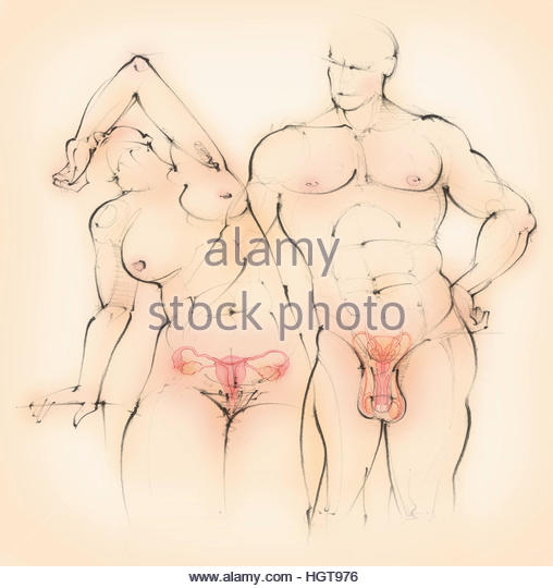 Naked man and woman showing male and female reproductive systems - Stock-Bilder